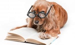 book pubisher