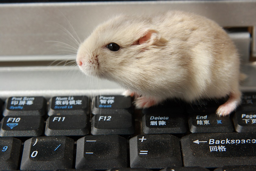 pet blogger success