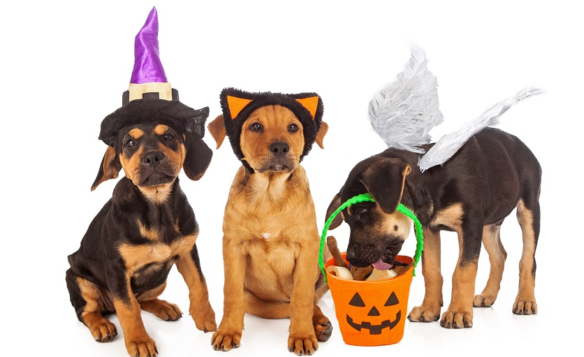 halloween costume puppies