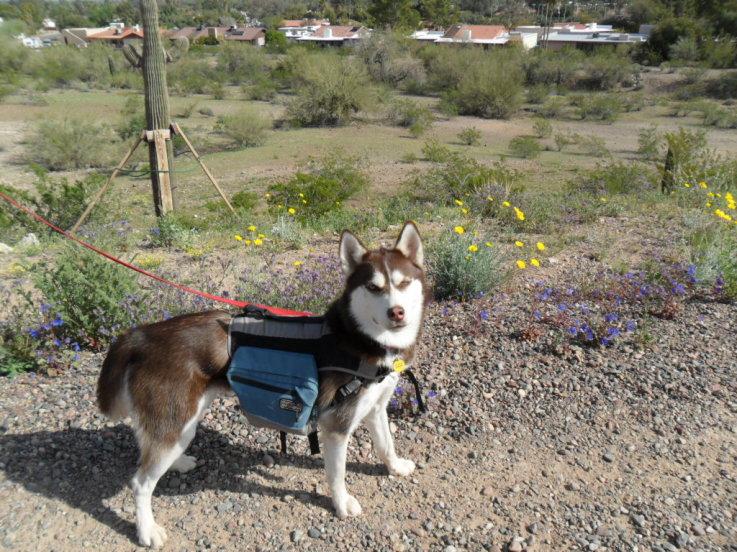 blog hop dog