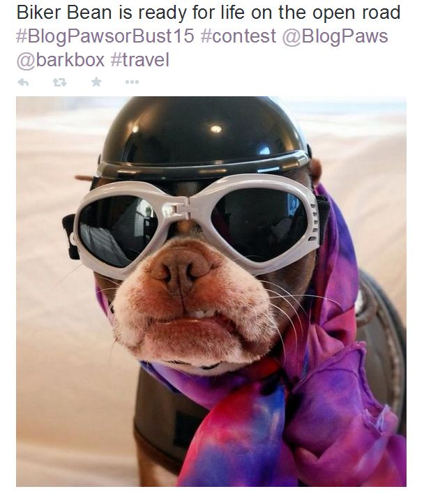 blogpaws or bust