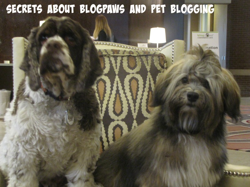 blogpaws dogs