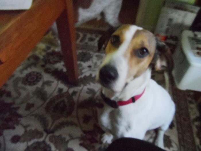 Emily Hound Dog