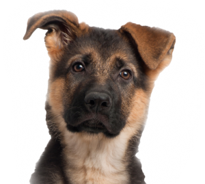 dog_test