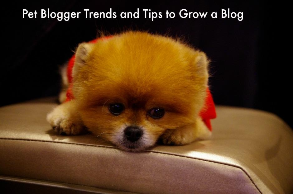 blogger trends