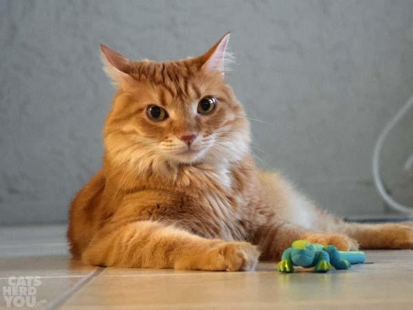 newton cat