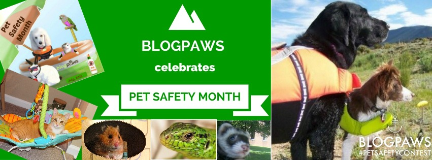 pet safety month blogpaws