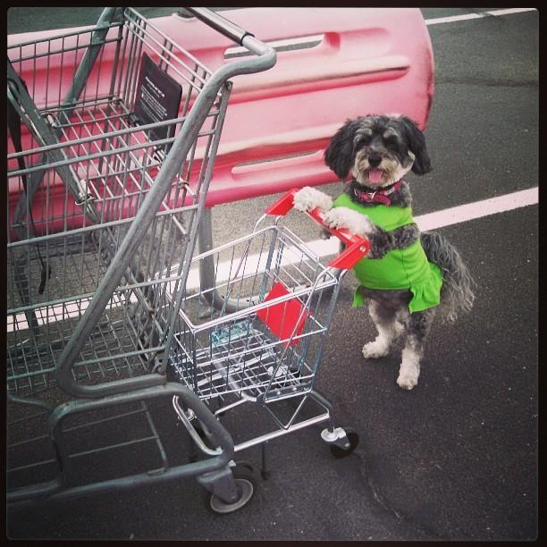Cute dog shopping