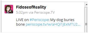 tweet on periscope