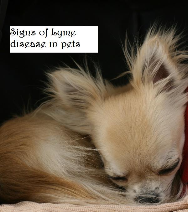Lyme disease symptoms in your pet