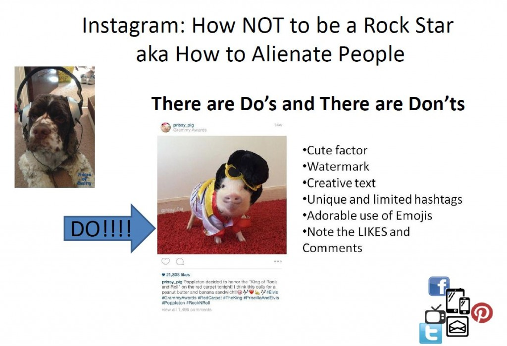 BlogPaws instagram tips