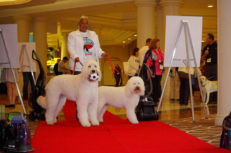 dogs at the BlogPaws Conference