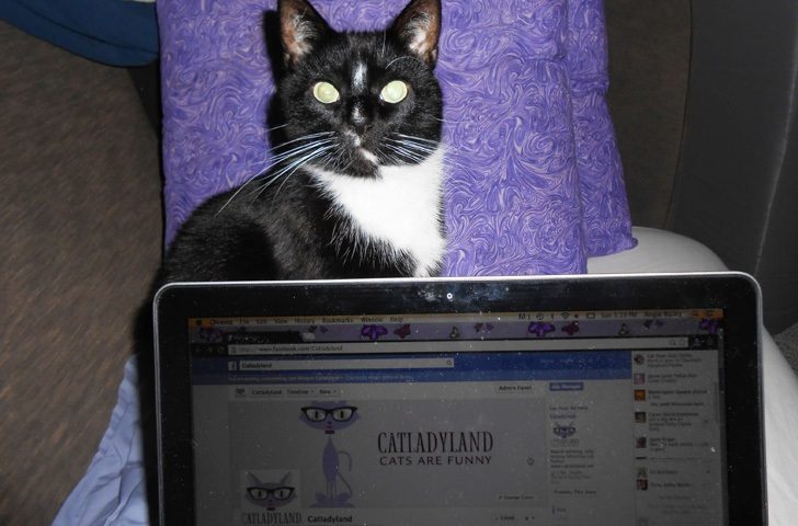 cosmo-catladyland-laptop
