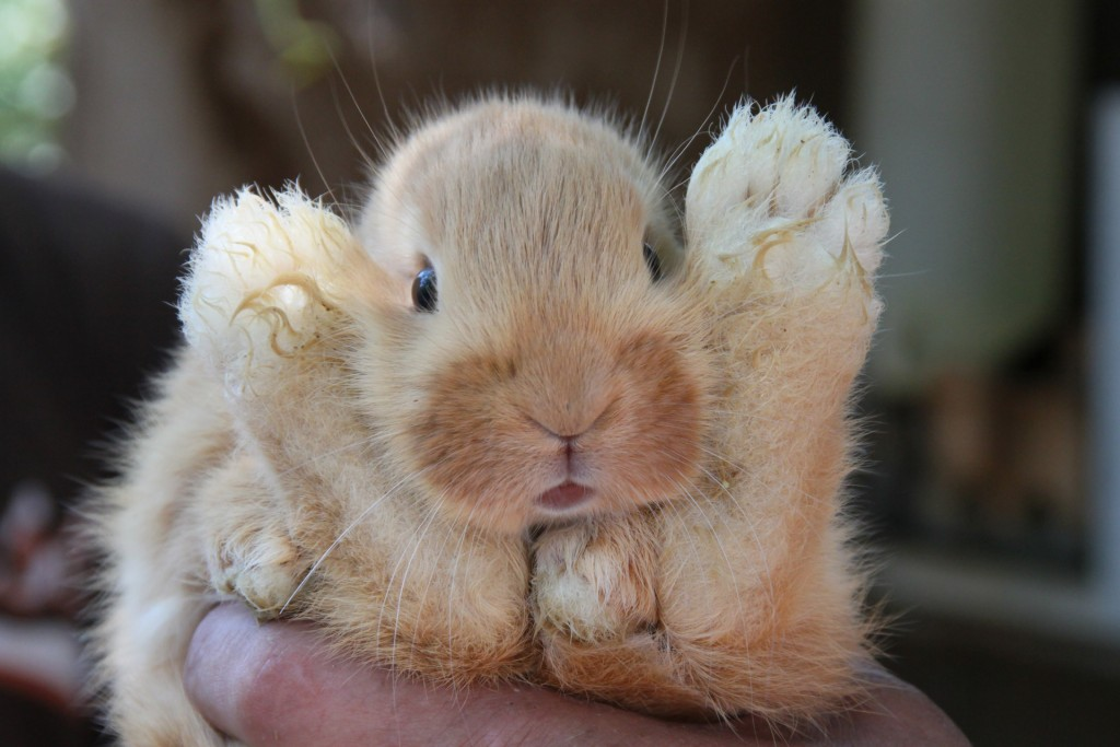 International Rabbit Day
