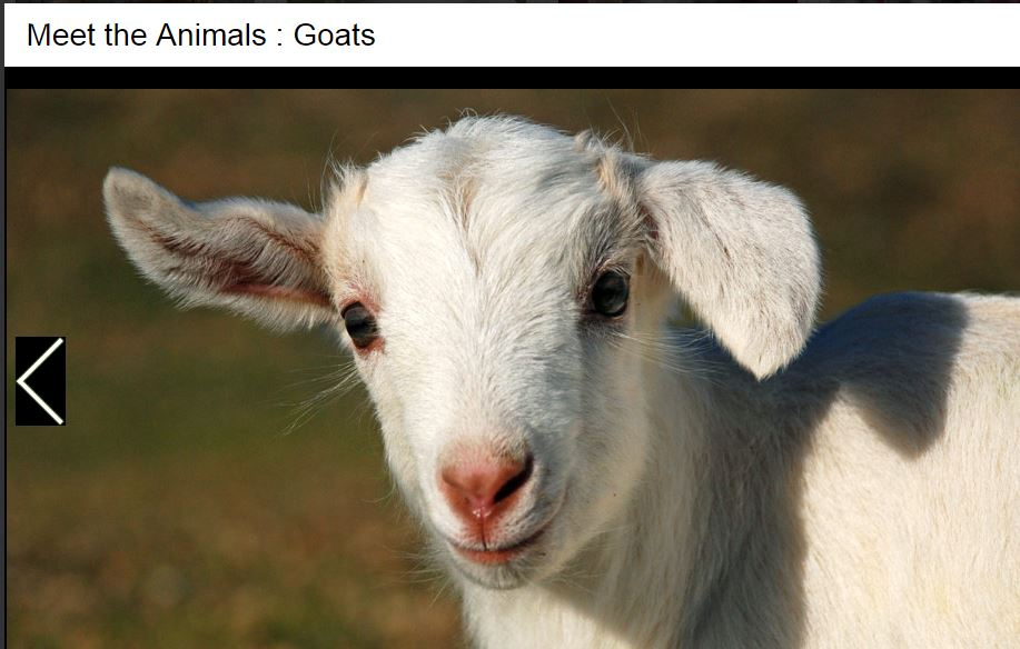 go kiss a goat on World Farm Animals Day