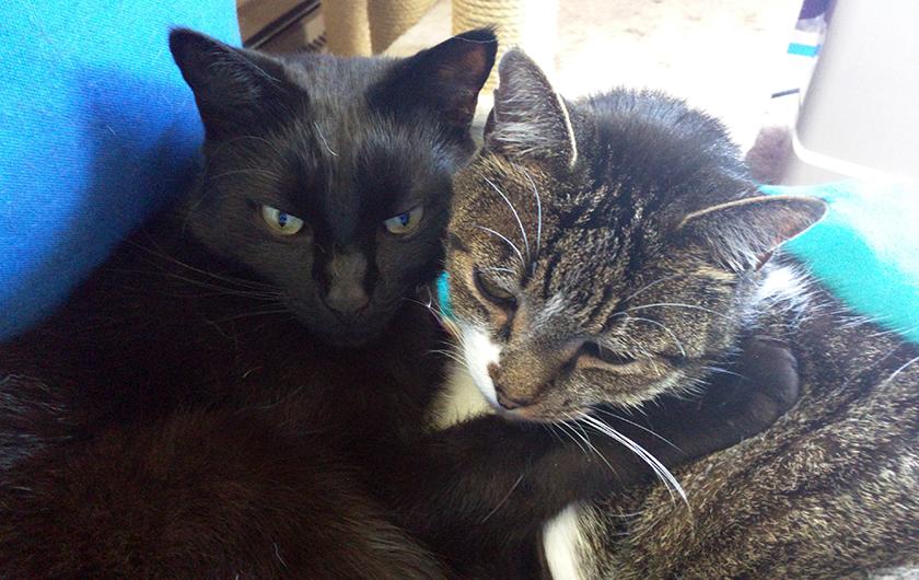 Thomas and Bella