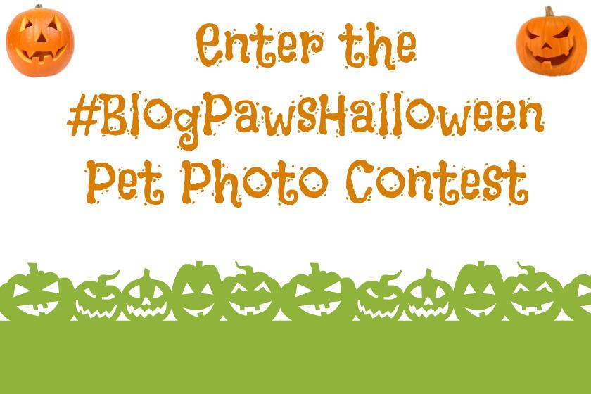Pet Halloween Photo Contest