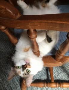 indoor cat comfort