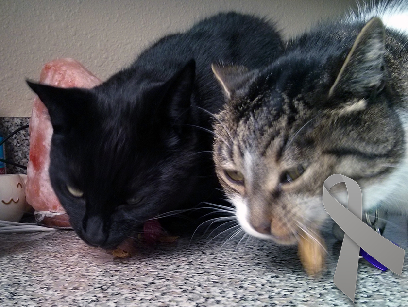 caring for diabetic cats