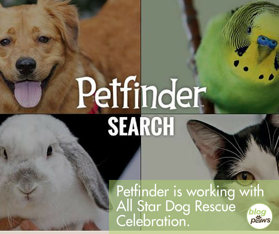 Petfinder and All Star Dog Rescue Celebration