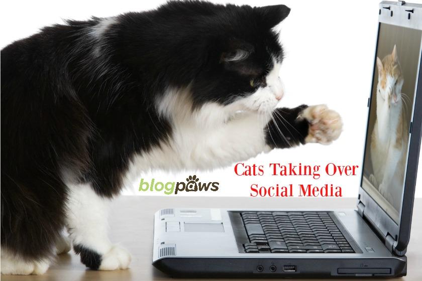 Cats on social media