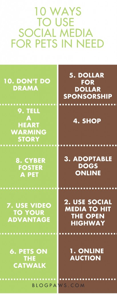 10 ways to help pets on social media