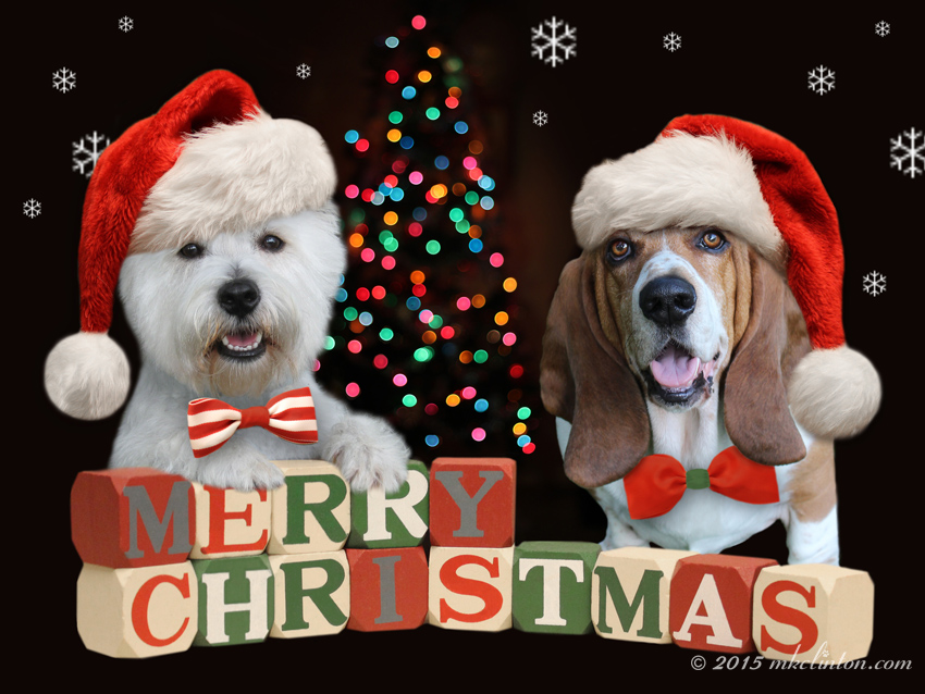 Bentley & Pierre Merry Christmas wishes