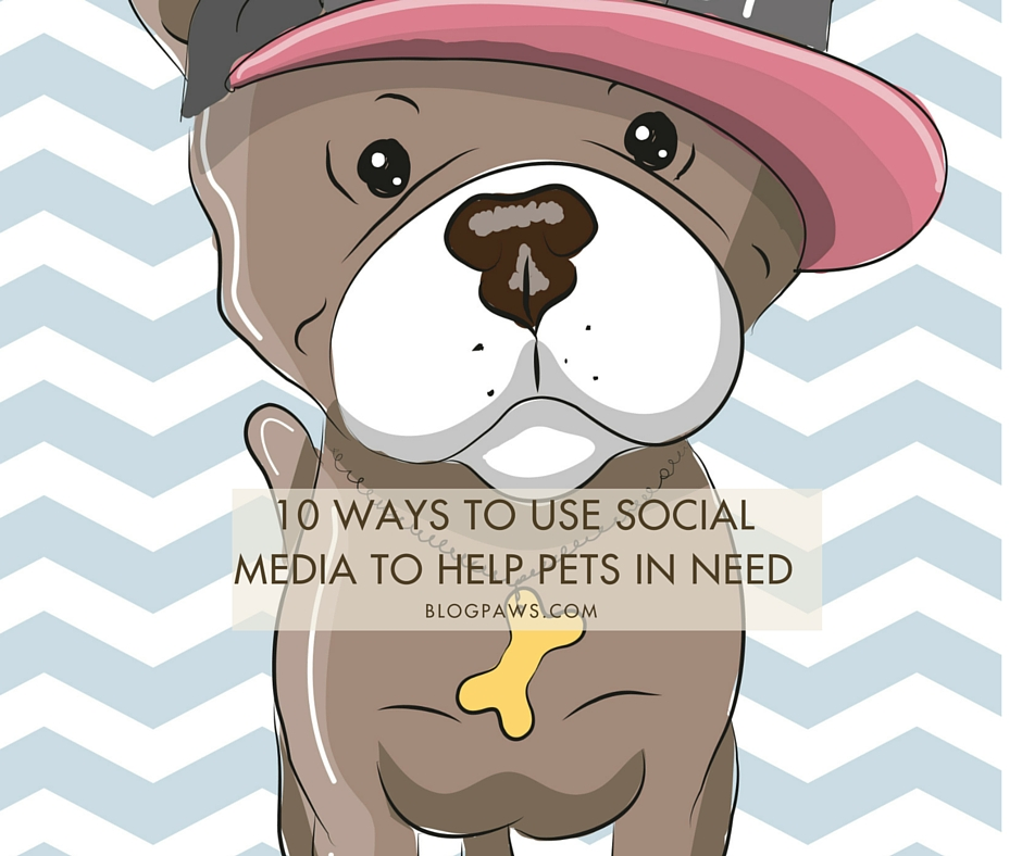 Use social media to help homeless pets