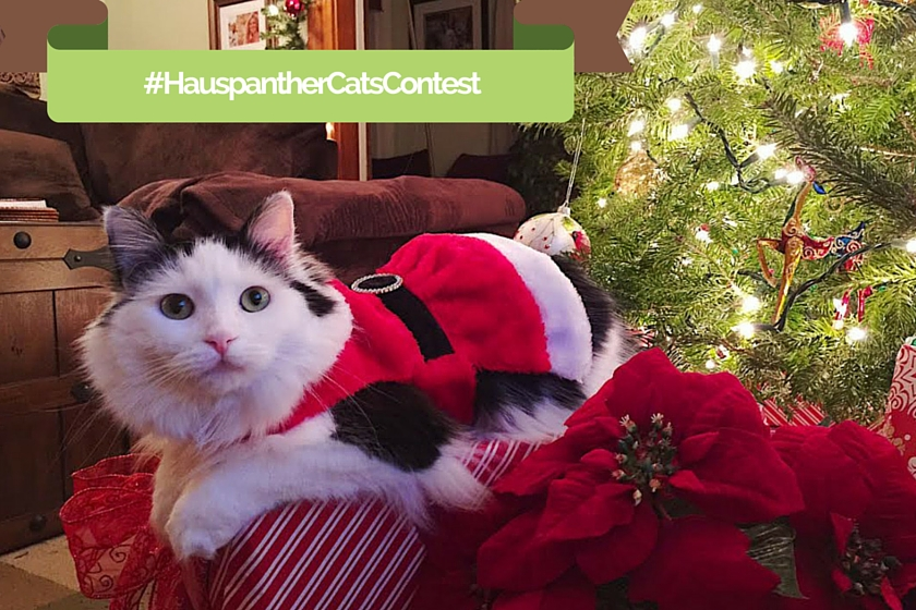 Cat Christmas Contest from Hauspanther