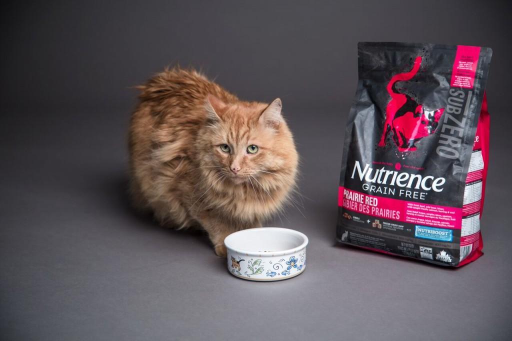 Cat eating SubZero cat food