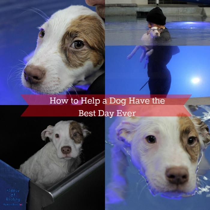 Helping pets on social media