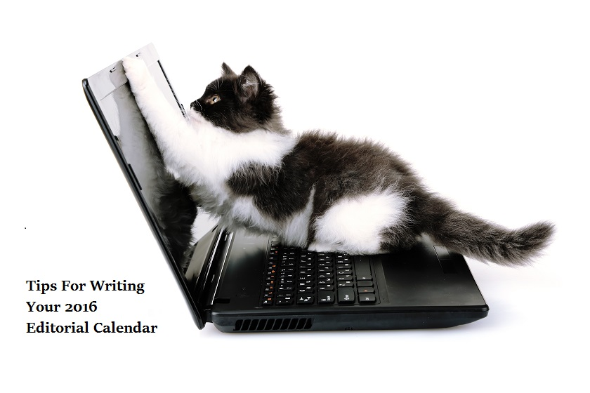 kitten on keyboard writing editorial calendar
