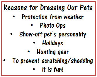Reasons for Dressing Our Pets