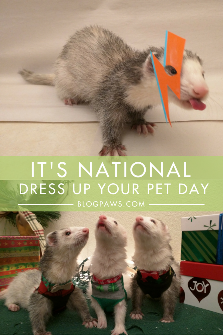 Should you dress up your pets
