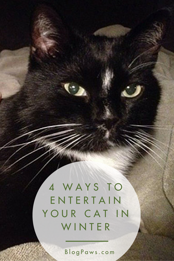 Ways to Entertain Your Cat in Winter