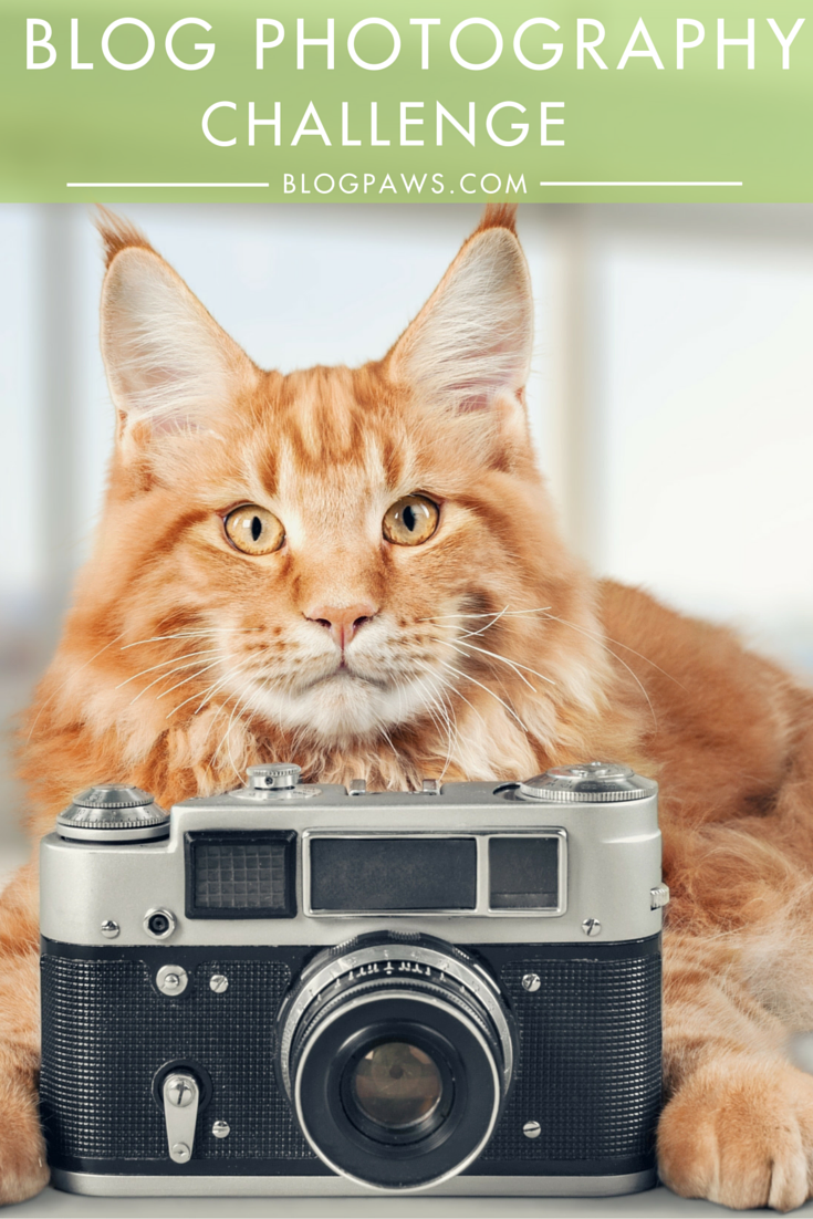 Blog Photography Challenge in the BlogPaws Community