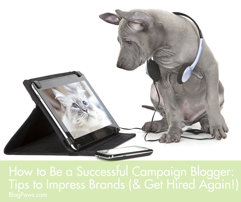 How to be a successful campaign blogger- Campaign