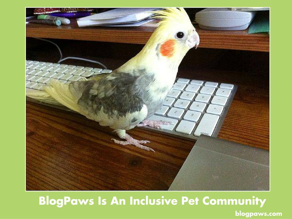 Confessions of a Pet Blogger