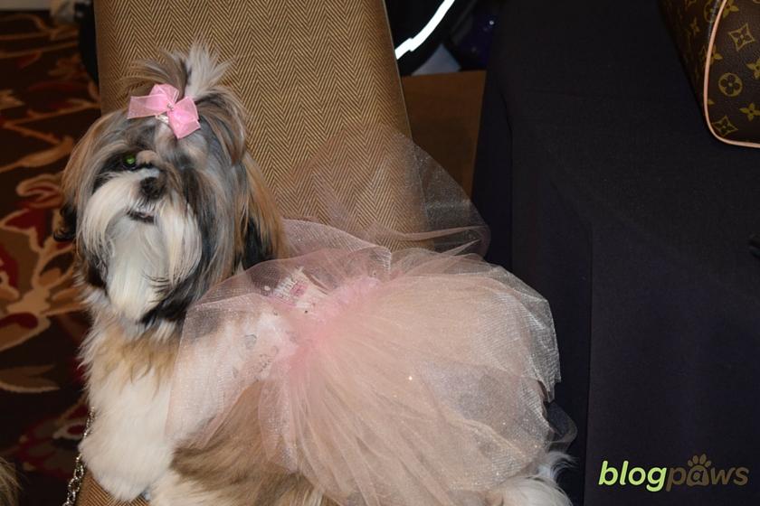dressy dog