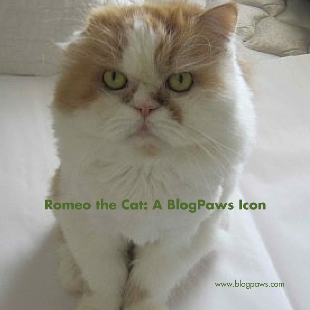 BlogPaws Icon Romeo the Cat