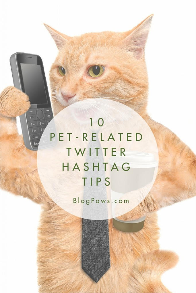 Twitter tips for pet bloggers
