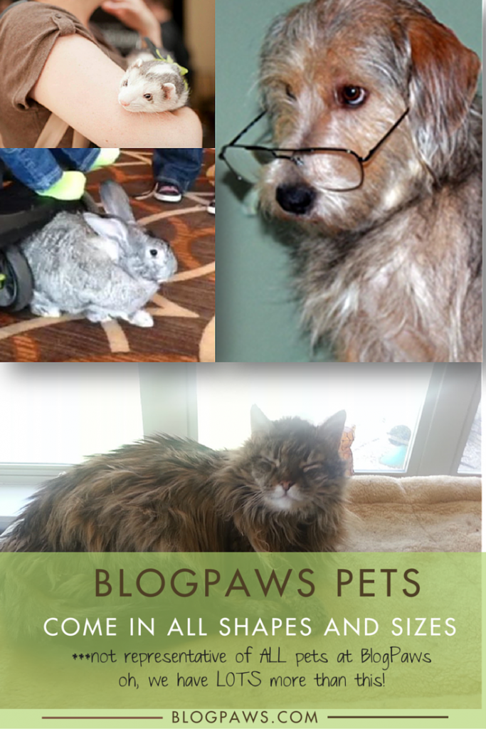 BlogPaws pets come in all shapes and sizes