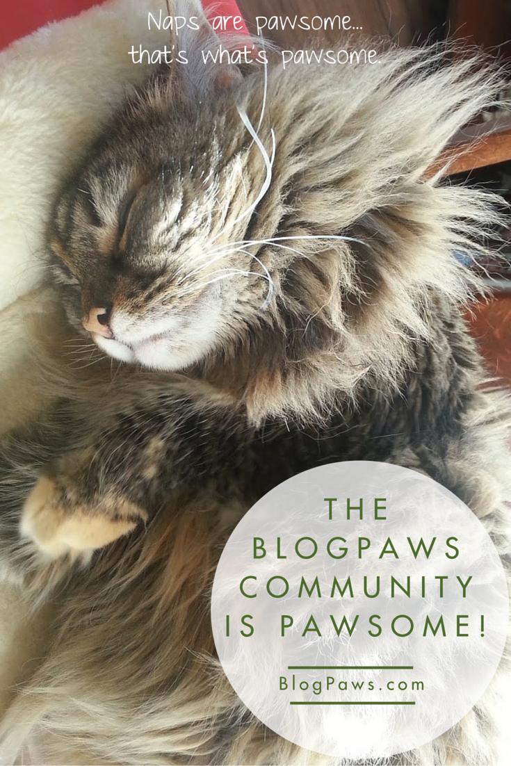 BlogPaws Community is Pawsome