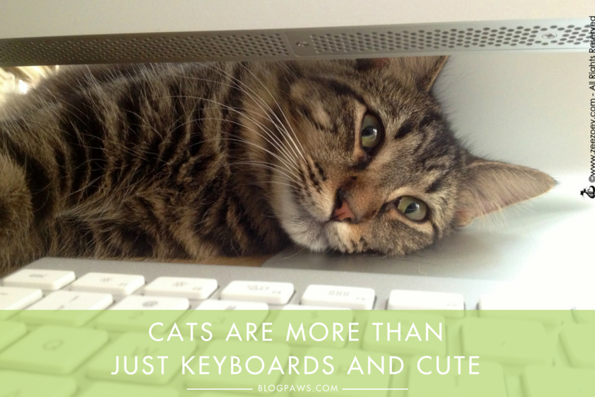 Cats are more than just keyboards and cute