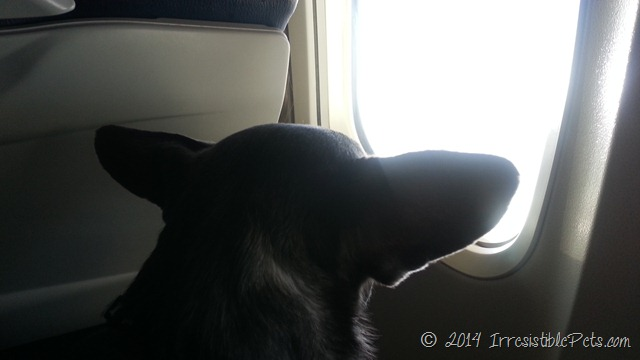 Chuy on an airplane