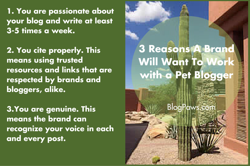 3 Reasons A Brand Might Work with a Pet Blogger