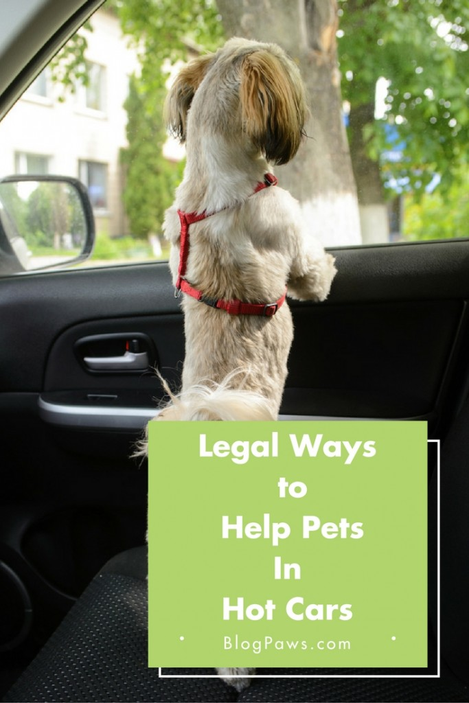 Legal Ways to Help Pets in Hot Cars