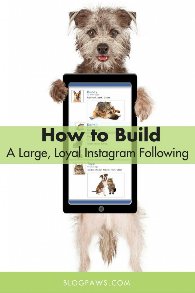 How to build a large following on Instagram