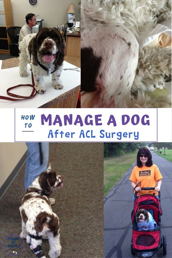 How to manage a dog with an ACL injury