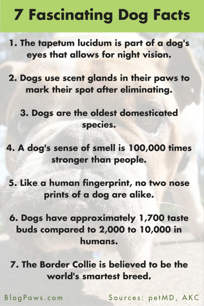 Fascinating Facts About Dogs